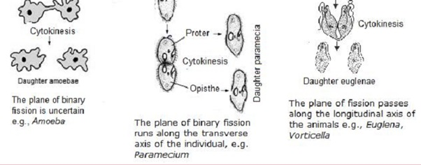Learn Binary Fission meaning, concepts, formulas through Study