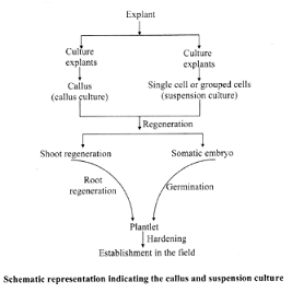 Learn Types Of Tissue Culture Meaning Concepts Formulas